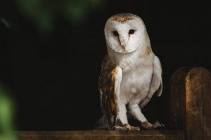 What keeps you up at night - Owl